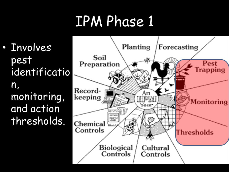 IPM Phase 1 Involves pest identification, monitoring, and action thresholds.