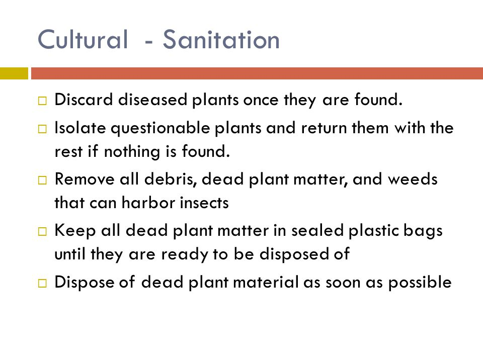 Cultural - Sanitation Discard diseased plants once they are found.