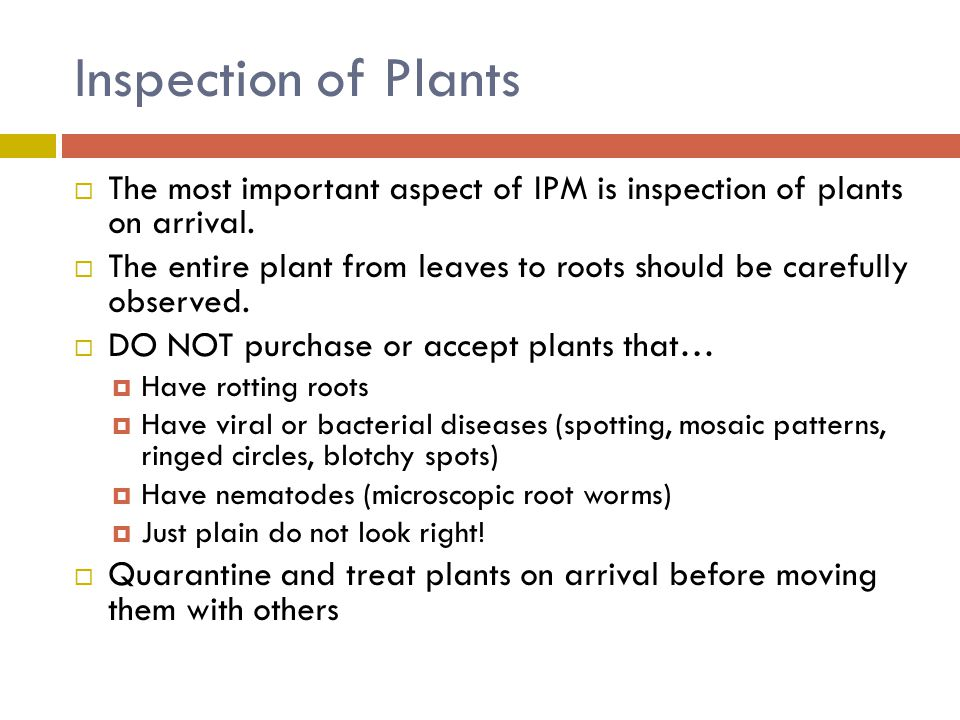 Inspection of Plants The most important aspect of IPM is inspection of plants on arrival.