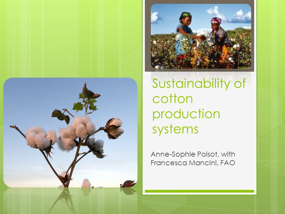Sustainability of cotton production systems