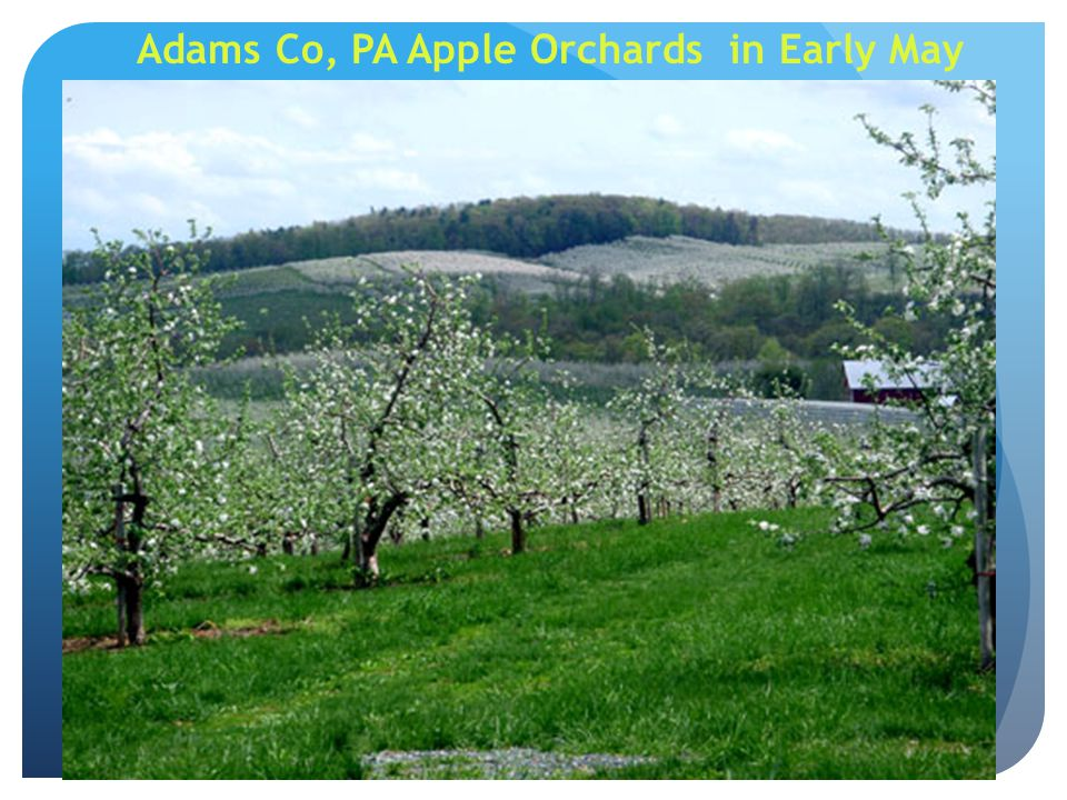 Adams Co, PA Apple Orchards in Early May