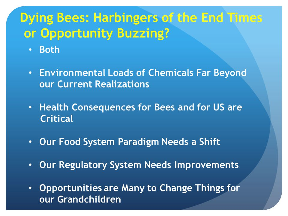Dying Bees: Harbingers of the End Times or Opportunity Buzzing