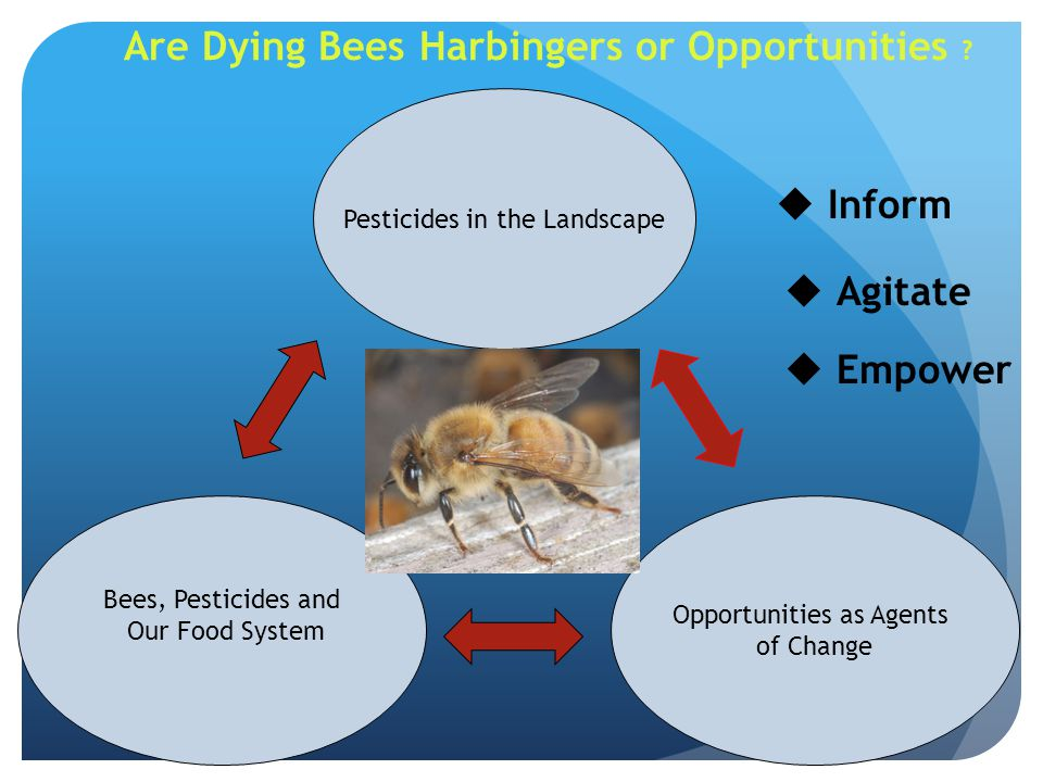 Inform Agitate Empower Are Dying Bees Harbingers or Opportunities