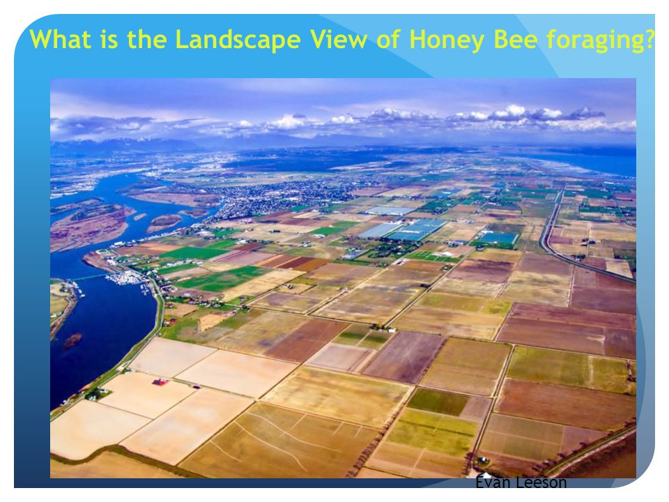 What is the Landscape View of Honey Bee foraging