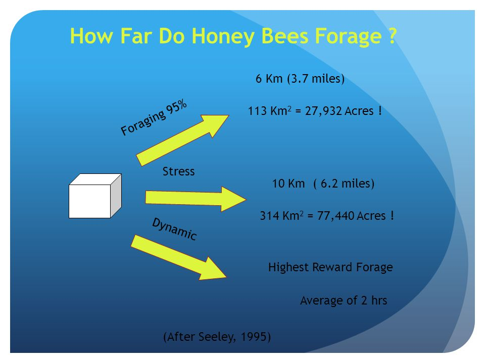 How Far Do Honey Bees Forage