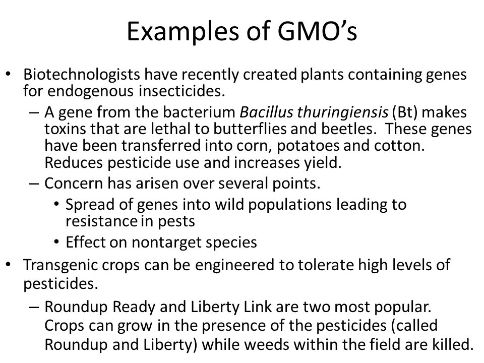 Examples of GMO's Biotechnologists have recently created plants containing genes for endogenous insecticides.