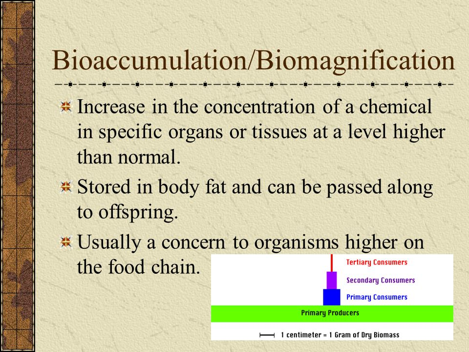 Bioaccumulation/Biomagnification
