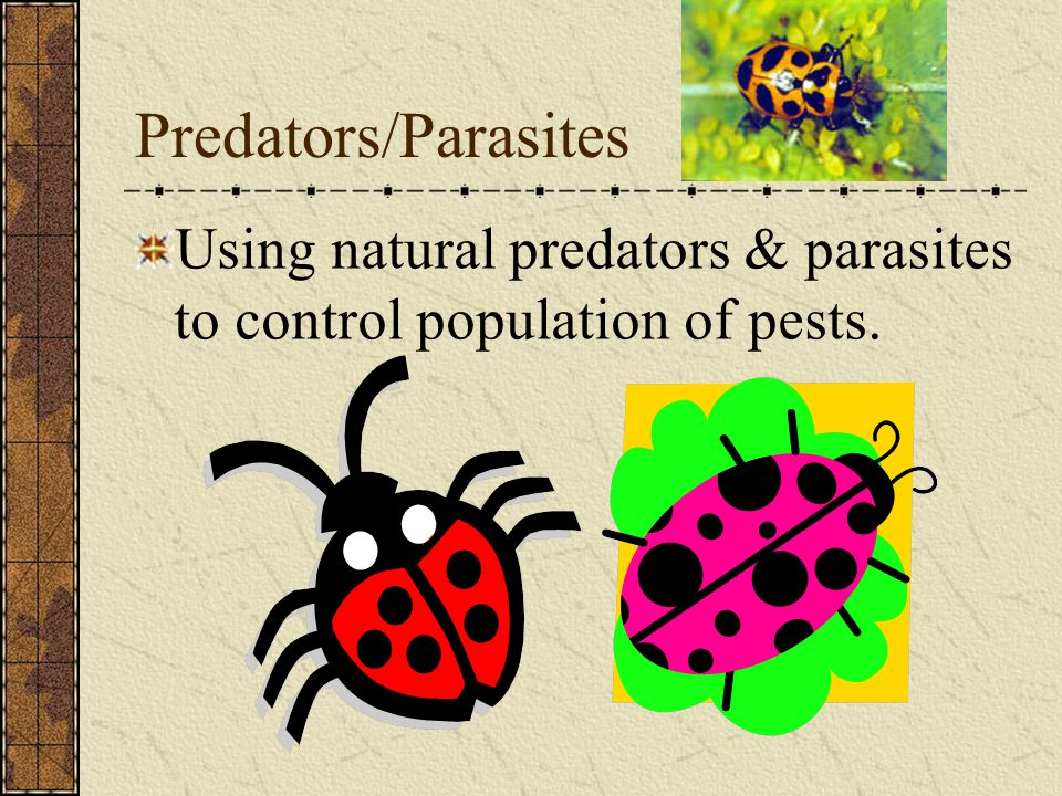 Predators/Parasites Using natural predators & parasites to control population of pests.
