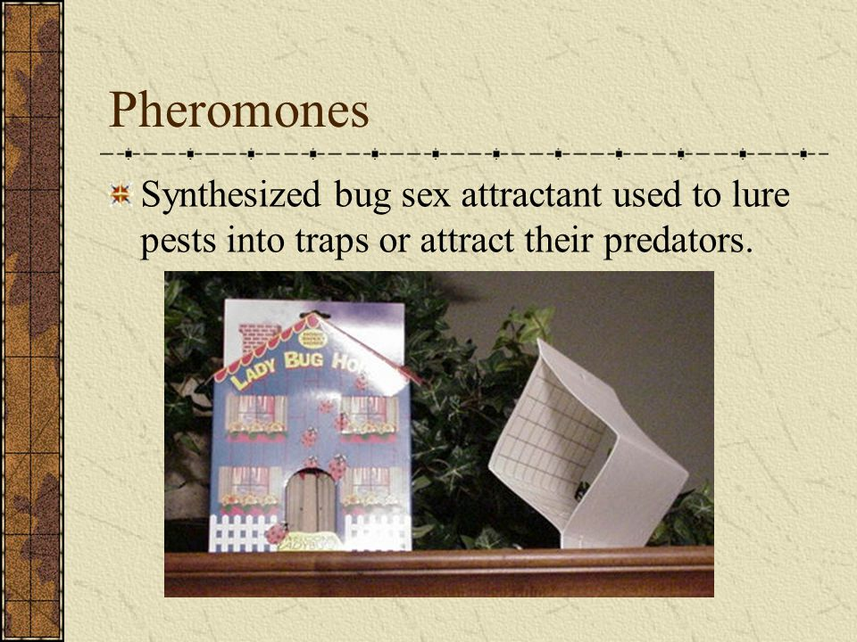 Pheromones Synthesized bug sex attractant used to lure pests into traps or attract their predators.