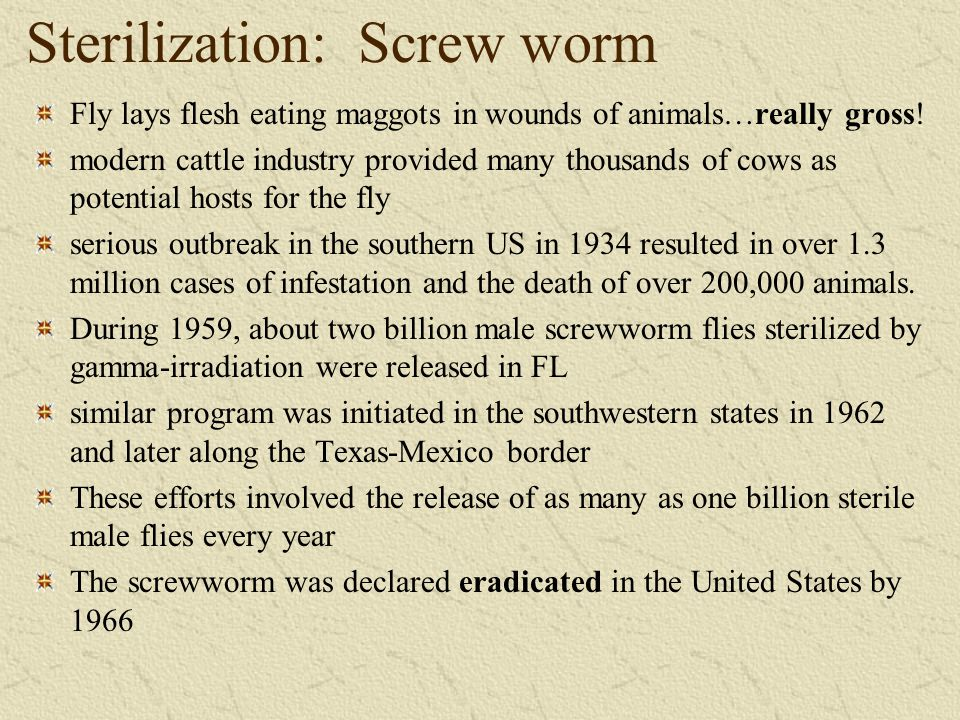 Sterilization: Screw worm