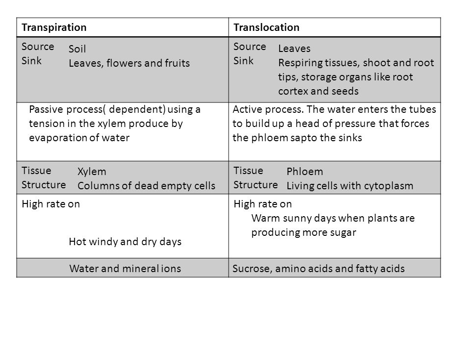 Transpiration Translocation. Source. Sink. Tissue. Structure. High rate on. Soil. Leaves, flowers and fruits.