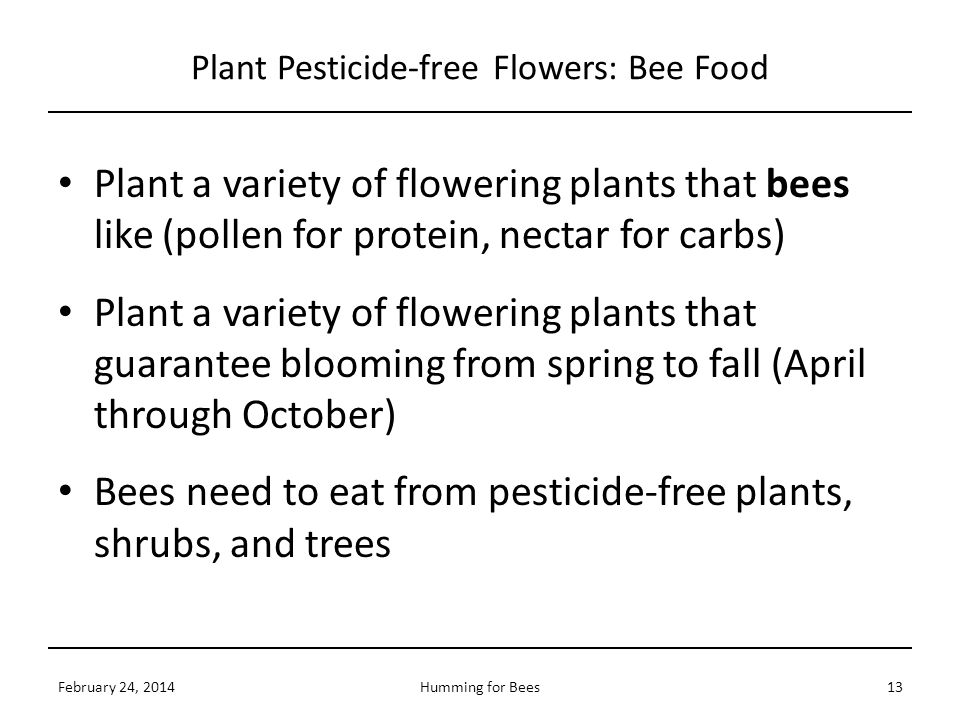 Plant Pesticide-free Flowers: Bee Food