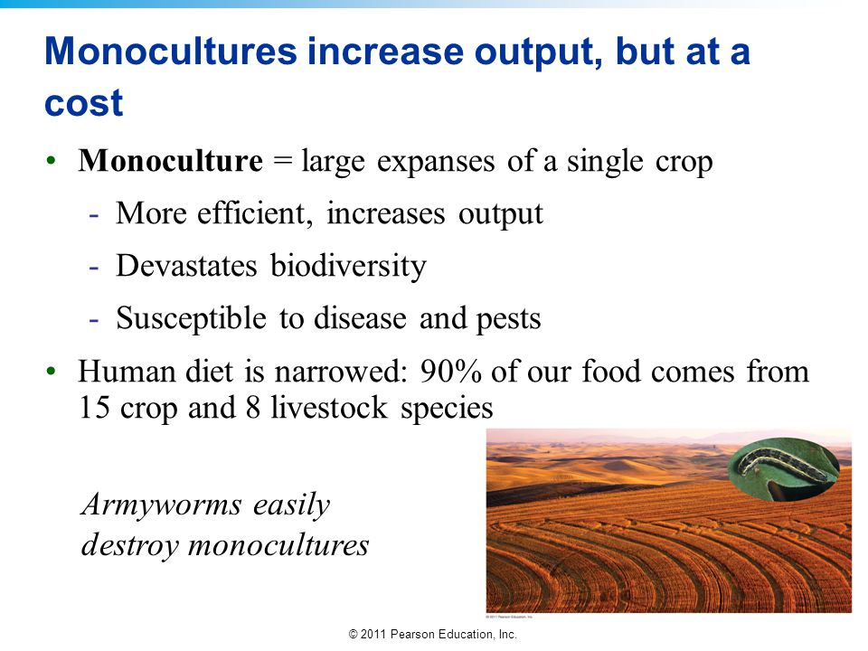 Monocultures increase output, but at a cost