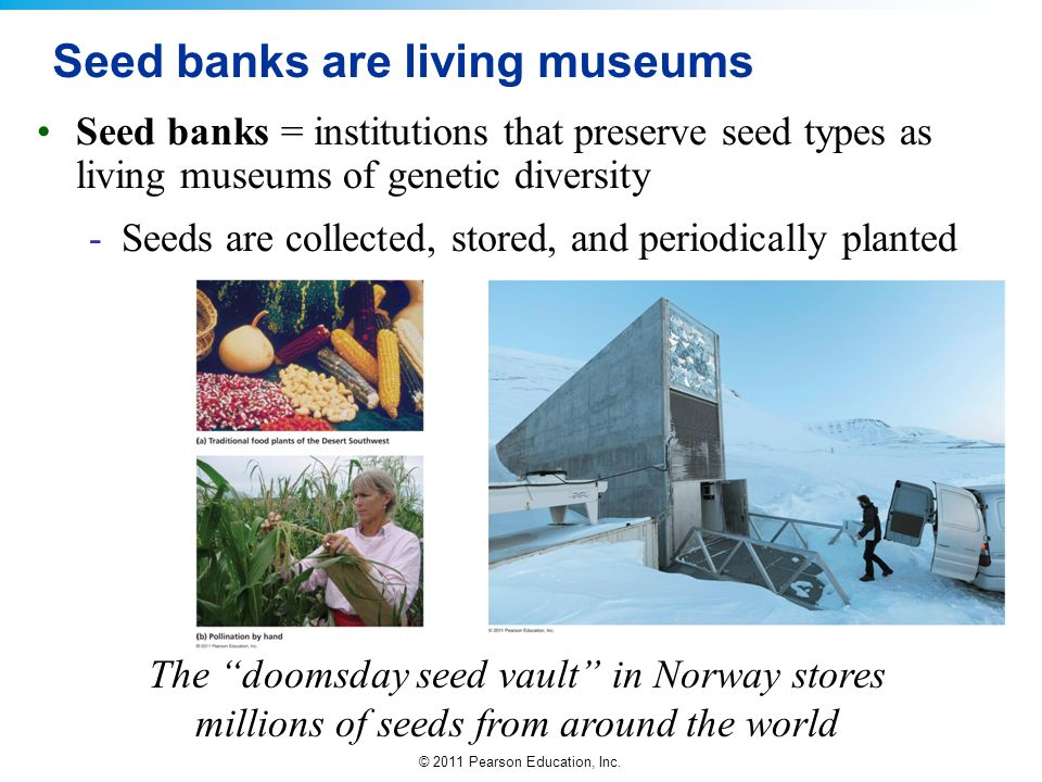 Seed banks are living museums