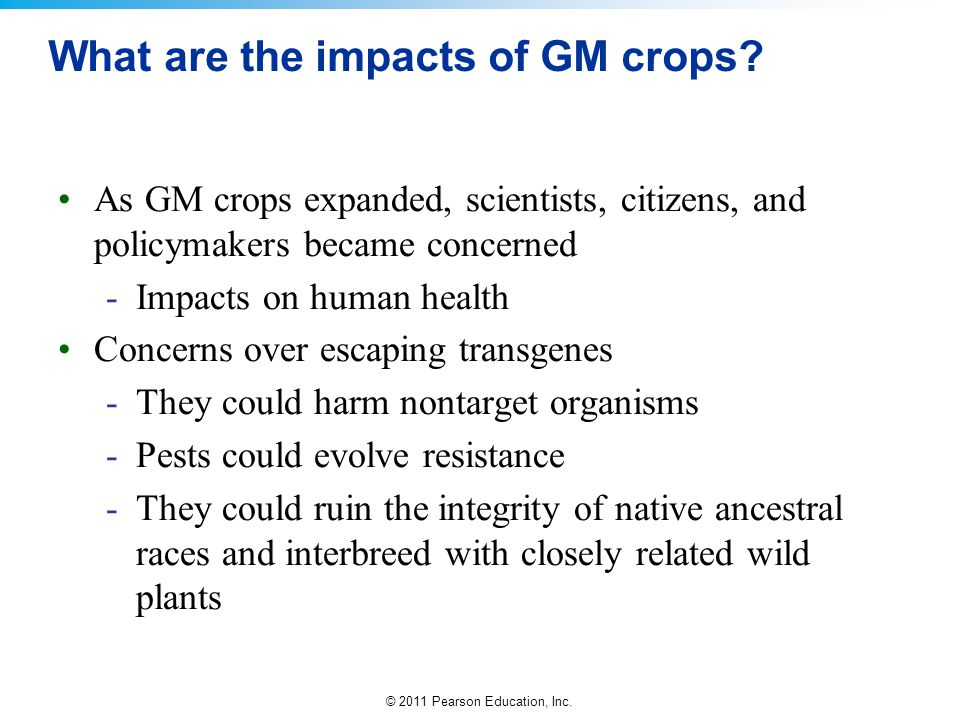 What are the impacts of GM crops