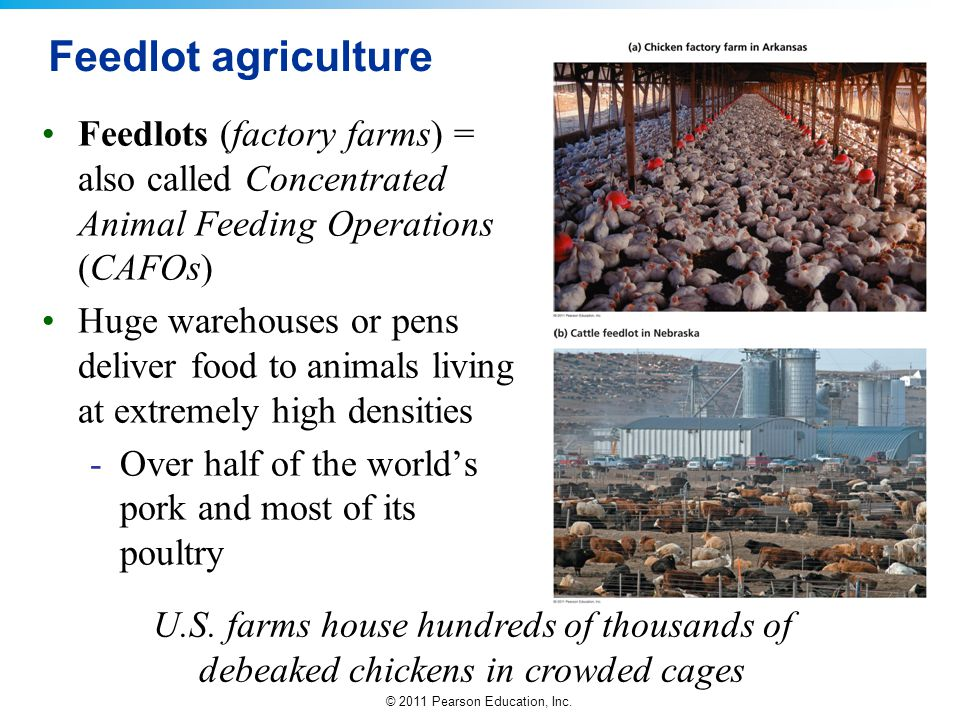 Feedlot agriculture Feedlots (factory farms) = also called Concentrated Animal Feeding Operations (CAFOs)