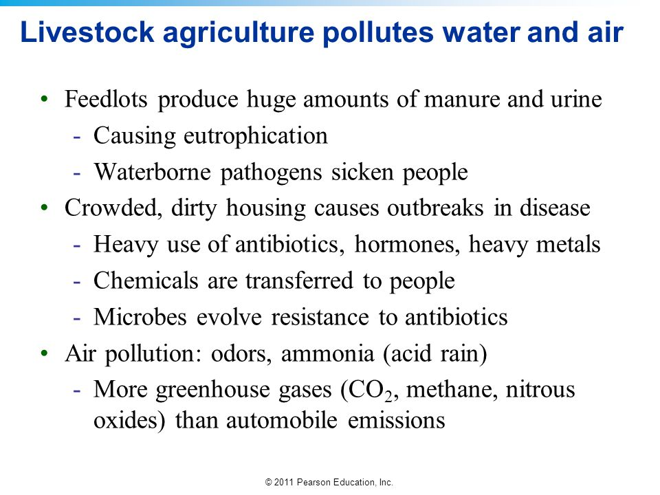 Livestock agriculture pollutes water and air