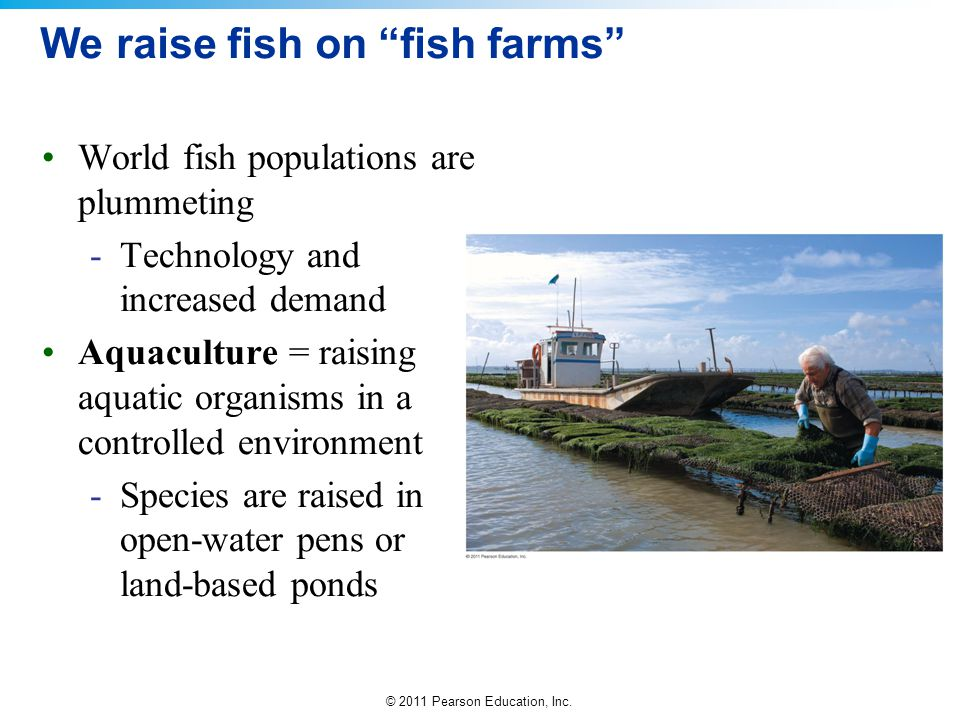 We raise fish on fish farms