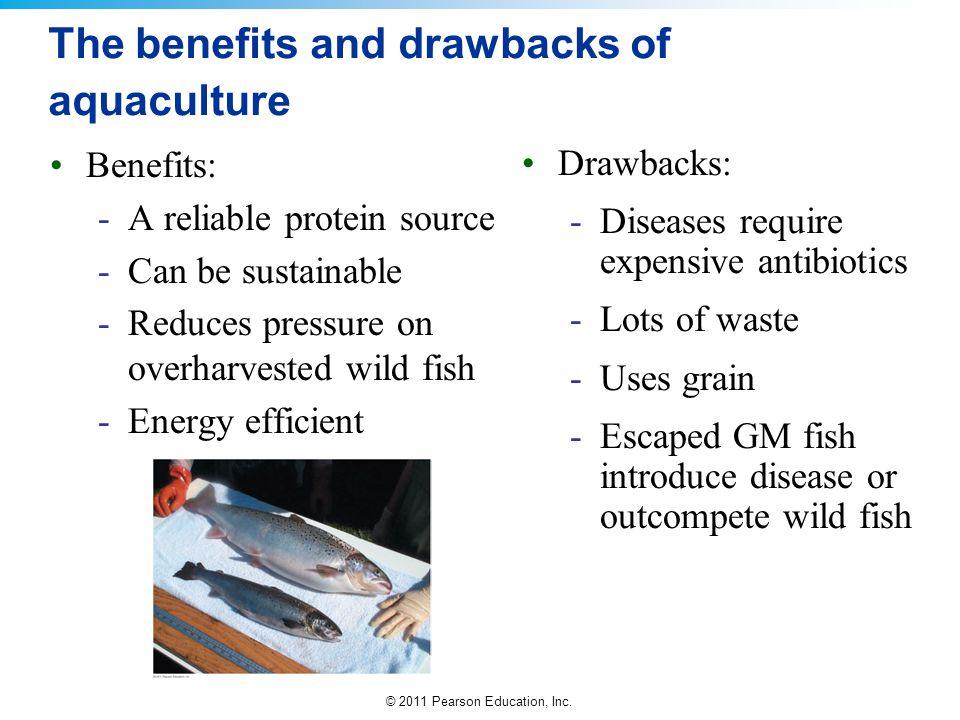 The benefits and drawbacks of aquaculture