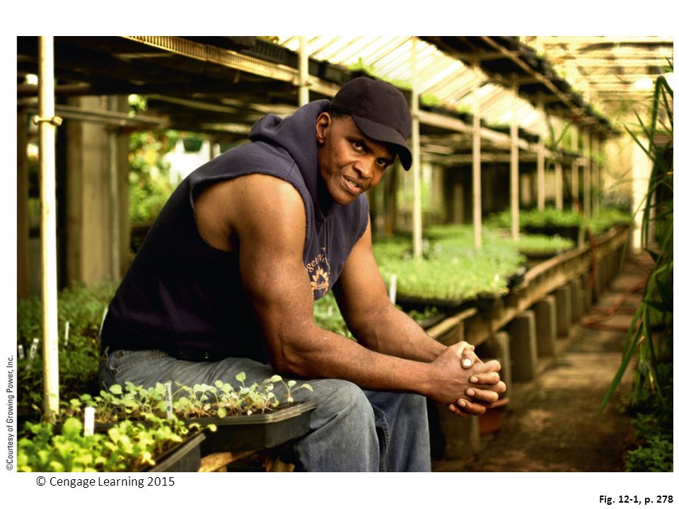 Figure 12-1: In 1996, Will Allen founded Growing Power—an urban farm in Milwaukee, Wisconsin.