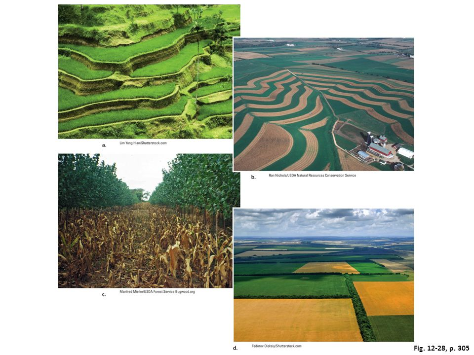 Figure 12-28: Solutions. Soil conservation methods include (a) terracing; (b) contour planting and strip cropping; (c) alley cropping; and (d) windbreaks between crop fields.