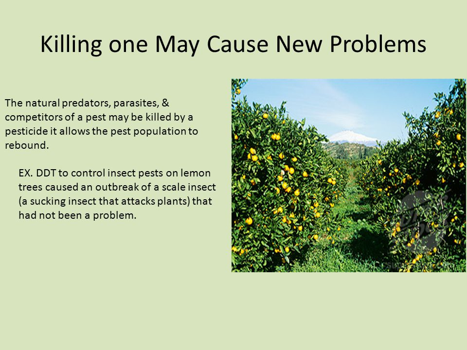 Killing one May Cause New Problems