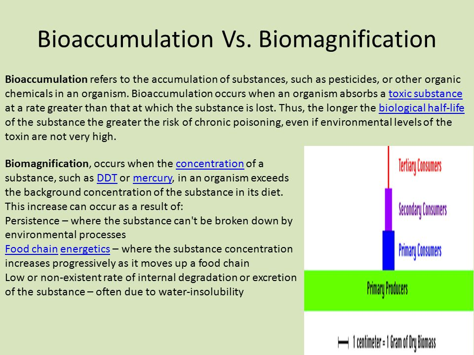 Bioaccumulation Vs. Biomagnification