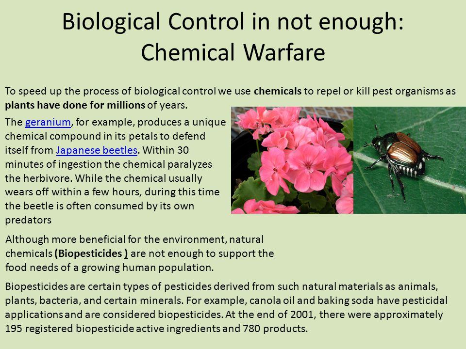 Biological Control in not enough: Chemical Warfare
