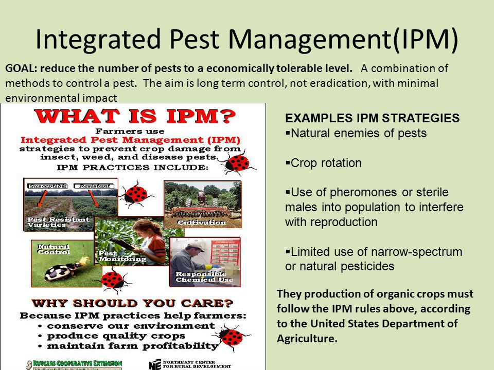 integrated pest management of palm oil Nbpol has operated an integrated pest management (ipm) system since 1998 the system follows generally accepted principles of field monitoring, cultural control practices, biological controls and targeted use of pesticides needed to maintain pest damage below economic damage thresholds.