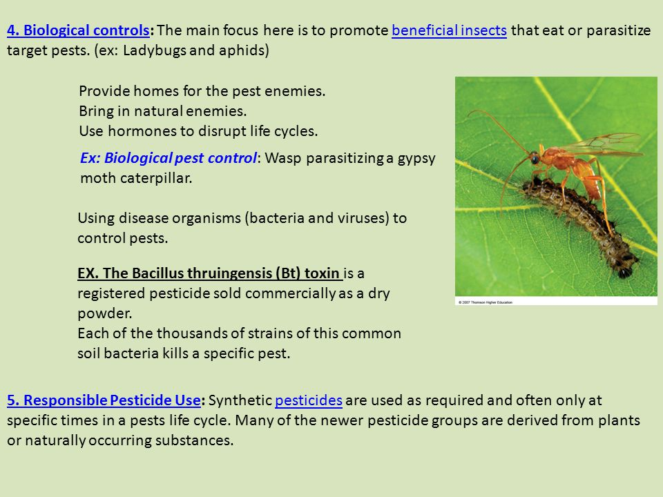4. Biological controls: The main focus here is to promote beneficial insects that eat or parasitize target pests. (ex: Ladybugs and aphids)