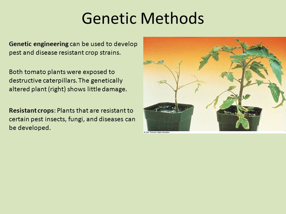 Genetic Methods Genetic engineering can be used to develop pest and disease resistant crop strains.