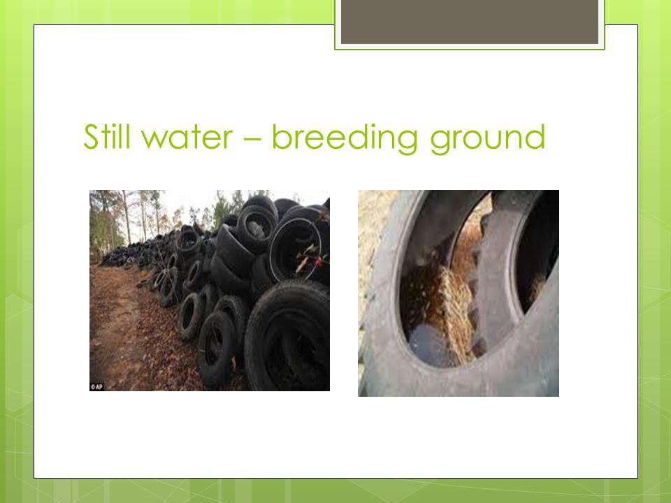 Still water – breeding ground