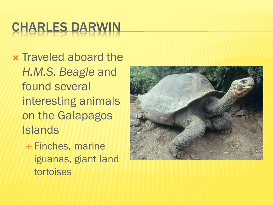 Charles darwin Traveled aboard the H.M.S. Beagle and found several interesting animals on the Galapagos Islands.
