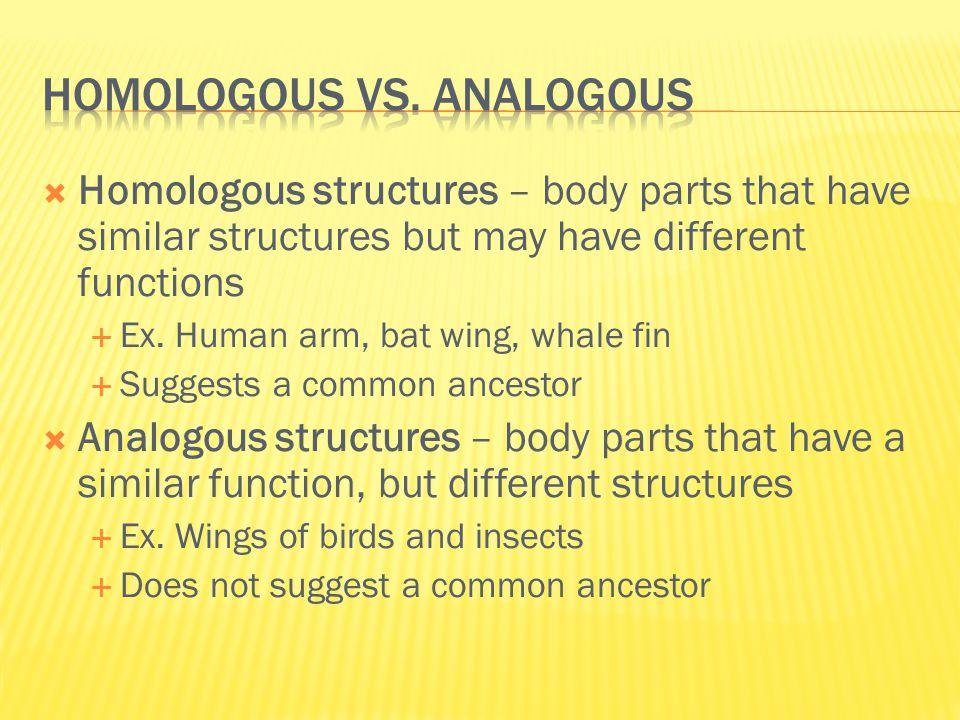 Homologous vs. analogous