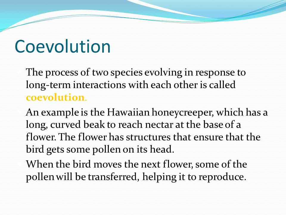 Coevolution The process of two species evolving in response to long-term interactions with each other is called coevolution.