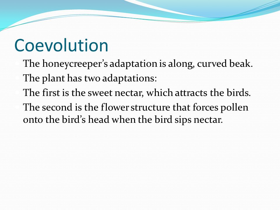 Coevolution The honeycreeper's adaptation is along, curved beak.