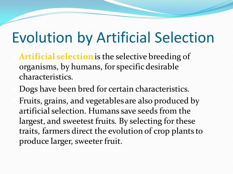 Evolution by Artificial Selection