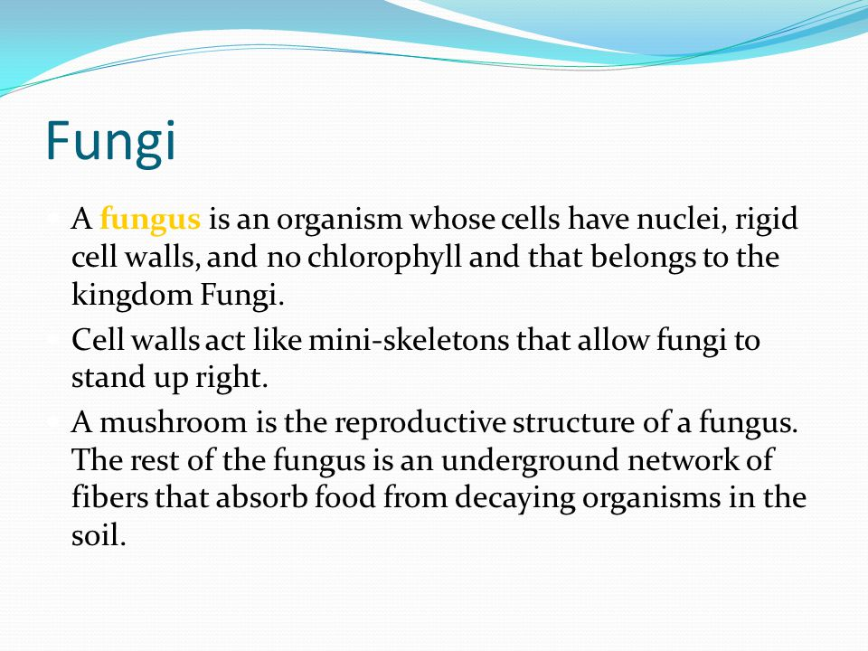 Fungi A fungus is an organism whose cells have nuclei, rigid cell walls, and no chlorophyll and that belongs to the kingdom Fungi.