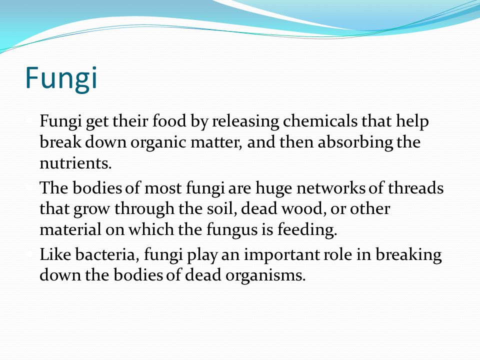 Fungi Fungi get their food by releasing chemicals that help break down organic matter, and then absorbing the nutrients.