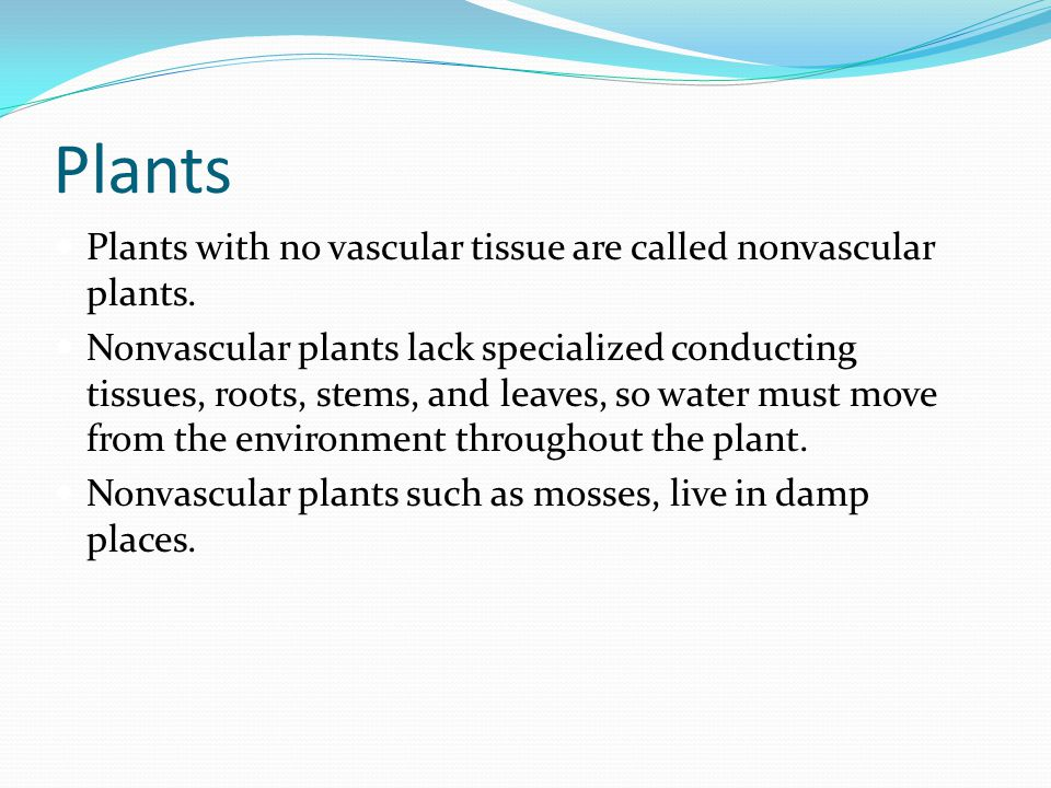 Plants Plants with no vascular tissue are called nonvascular plants.