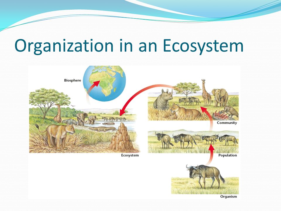 Organization in an Ecosystem