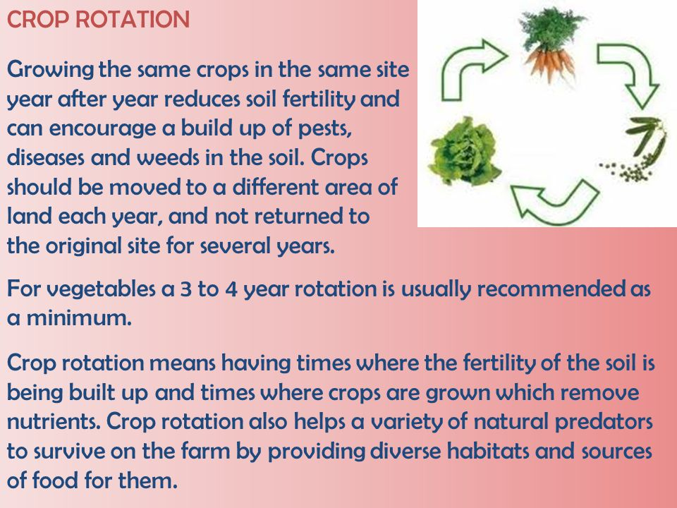 CROP ROTATION Growing the same crops in the same site. year after year reduces soil fertility and.