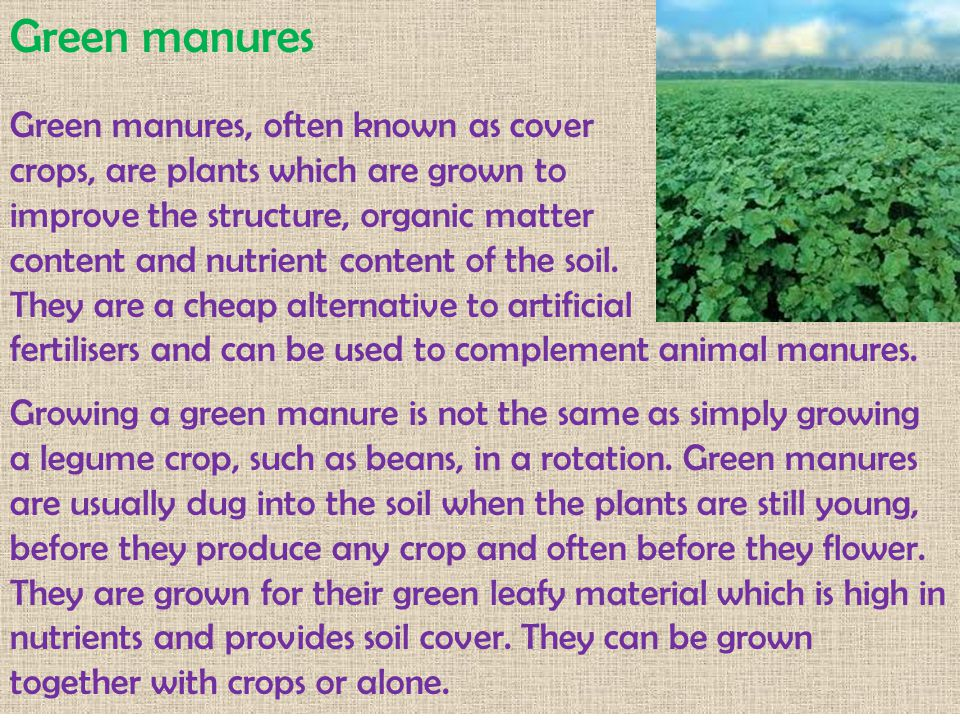 Green manures Green manures, often known as cover