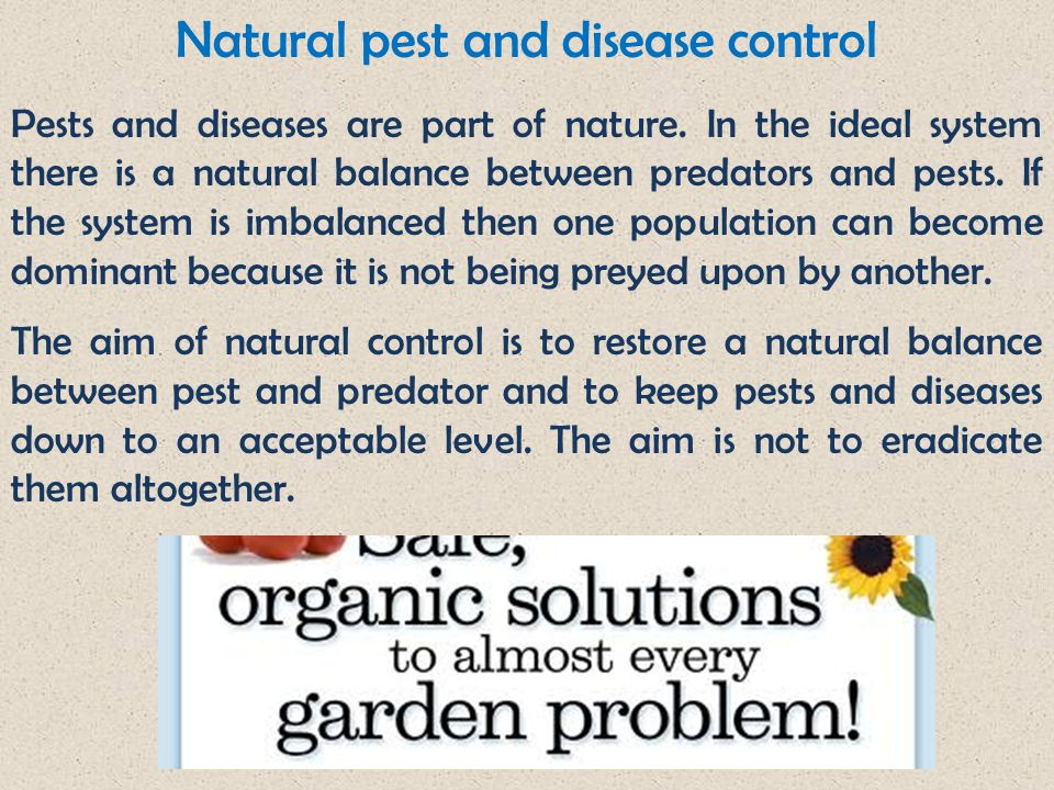Natural pest and disease control