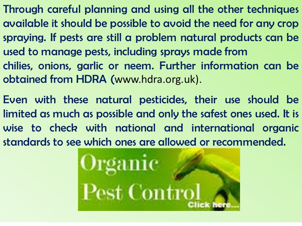 Through careful planning and using all the other techniques available it should be possible to avoid the need for any crop spraying. If pests are still a problem natural products can be used to manage pests, including sprays made from