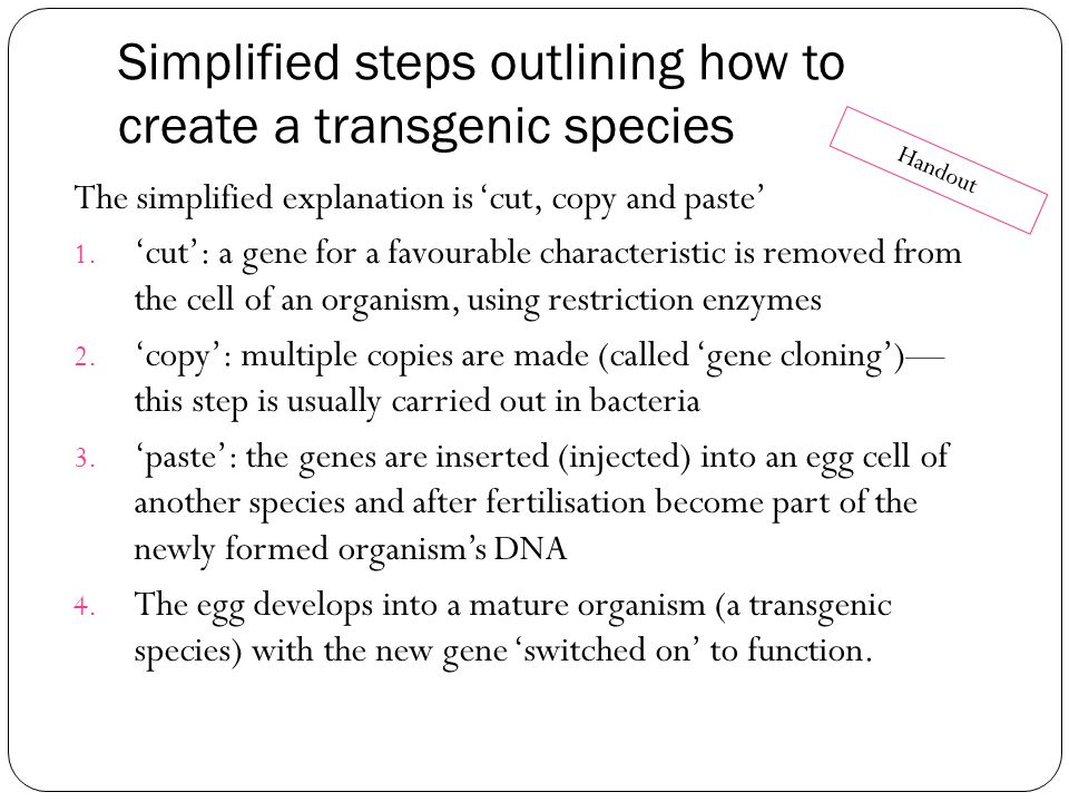 Simplified steps outlining how to create a transgenic species