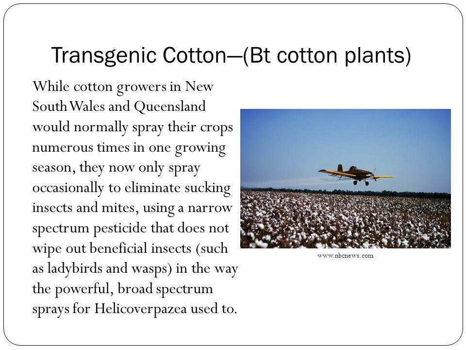 Transgenic Cotton—(Bt cotton plants)