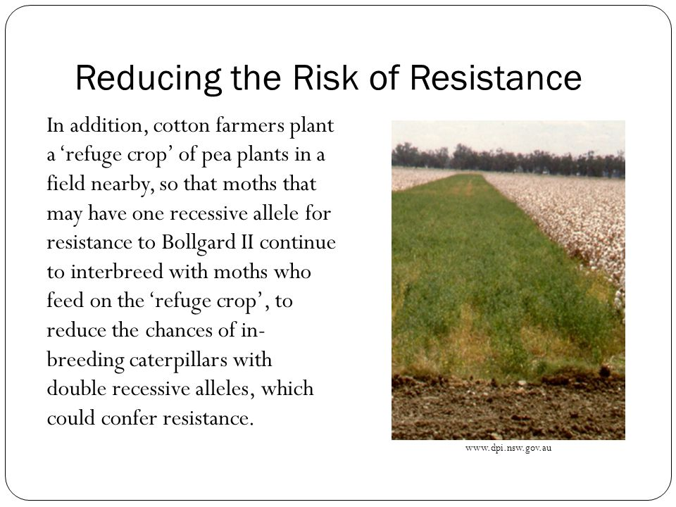 Reducing the Risk of Resistance