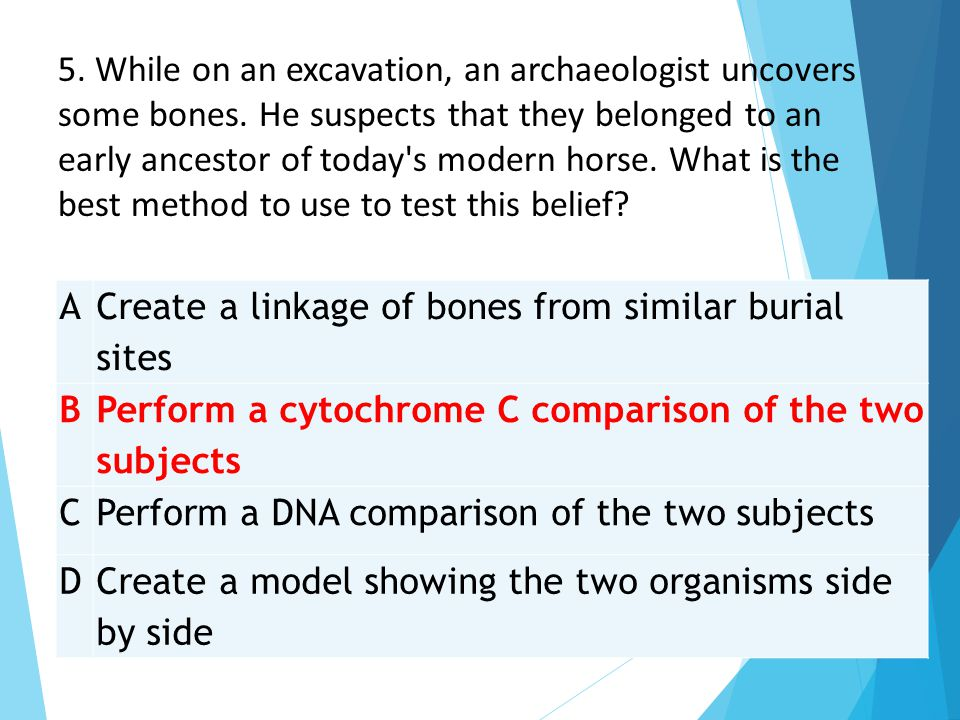 5. While on an excavation, an archaeologist uncovers some bones