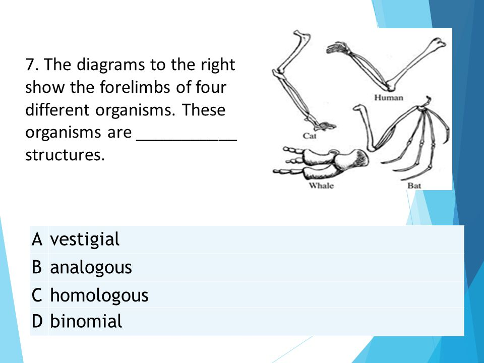 7. The diagrams to the right show the forelimbs of four different organisms. These organisms are ___________ structures.